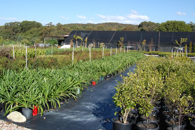 how to work in plant nursery